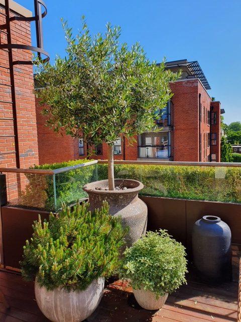 W6 Garden Centre, W6 Garden Centre, W6 Garden Centre Cafe, W6 Garden Centre Cafe, W6GC, Nick Dentes, LouiseAlhadeff, Garden Centre, House and Home, Hammersmith Locals, Hammersmith, W6, Hammersmith Garden Centre, LBHF, Urban Garden, Landscape Gardening, Gardening Services, Urban Landscape Garden