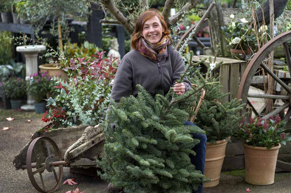 West London Christmas Trees and Gifts: W6 Garden Centre – Dreaming Of A Green Christmas?