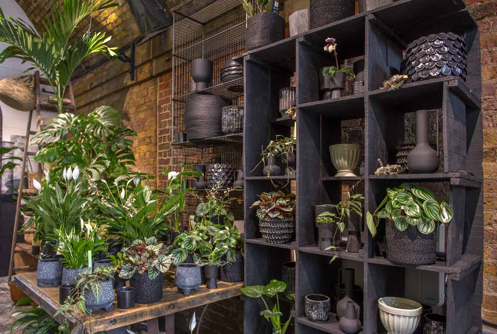 With its new Green Room dedicated to indoor plants, stylish ranges of festive gifts and decorations, family entertainment and award-winning Cafe, the W6 Garden Centre is the place to go for festive inspiration